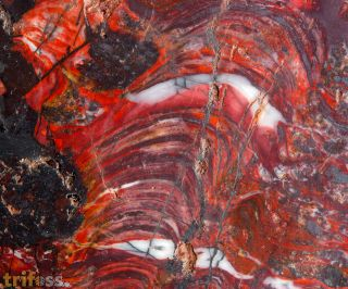 Stromatolith - Collenia undosa Walcott 1916