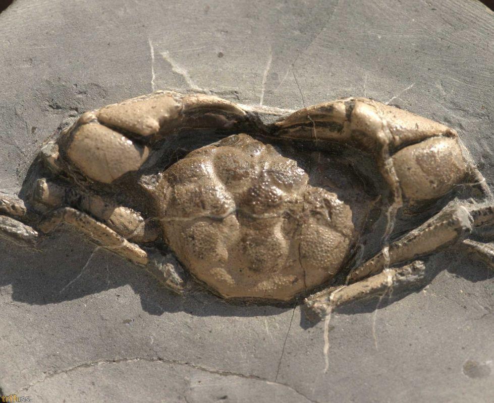order cheap ativan oregon fossil