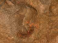 Homalopteon elegans & Geragnostus sp.