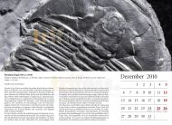 Fossil calender 2010