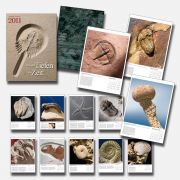 Fossil calender 2011