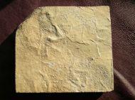 Fossil Bird Tracks