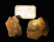 Ampyx priscus THORAL