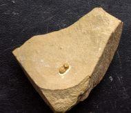 Marocconus notabilis (GEYER 1993)