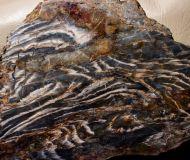 Stromatolte ?Aspetia aff. digitata a (Grey 1984)