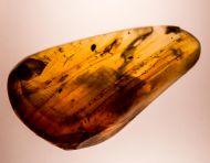 Bryophyta non det. (Sporophyt)