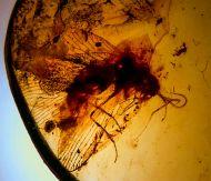 Lacewing - Neuroptera non det.