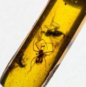 Arachnida & Diptera non det.