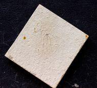 Geocoma libanotica (König, 1825)