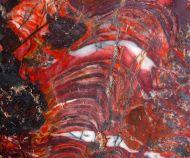 Stromatolith Collenia undosa Walcott 1916