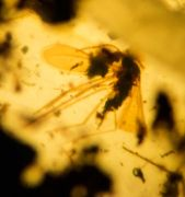 Massenfang : Ixodida, Psychodidae, Diptera & Araneae